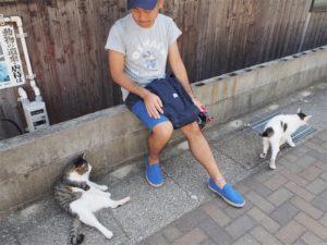《福岡》北九州 さくらねこに会える猫島 藍島へ行ってみた